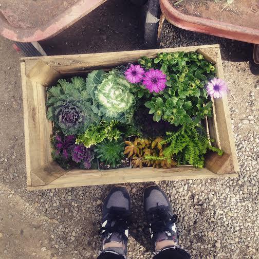 Garden day 9